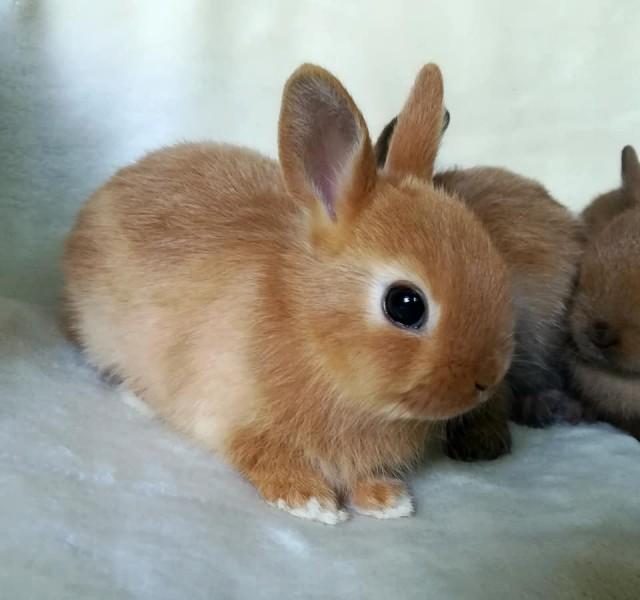 Stránku ponechávam na webe ako zdroj informácií pre záujemcov o chov  zdrobnených králikov aj keď som svoj Hobby chov Minikrálik ukončila. e9c228dcff4